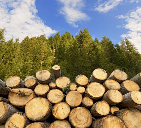 나무의 줄기는 잘라 전경 적층, 푸른 하늘과 구름 배경에 녹색 숲