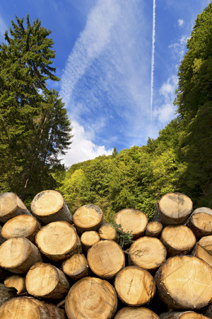 workable: Trunks of trees cut and stacked in the foreground, green forest in the background with blue sky and clouds