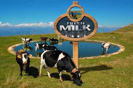 grazing: Wooden sign with a pole and text Fresh milk at a small mountain lake with grazing cows Stock Photo