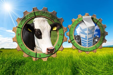 steel  milk: Two wooden gears with head of cow steel cans for milk and white packaging carton of milk in a green pasture. Concept of the milk processing Stock Photo