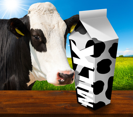 latte fresco: Imballaggio bianco latte fresco con latte di testo e punti neri, in un paesaggio di campagna con erba verde e una stretta di un bianco e nero mucca curiosa. Archivio Fotografico