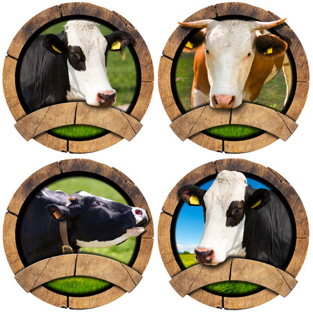 grass close up: Four wooden round symbols or icons with space for text and heads of cows. Isolated on white background