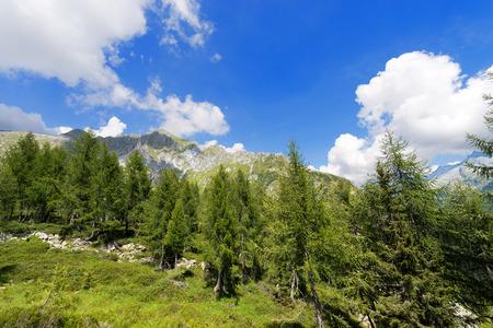 alto adige: Peaks in the National Park of Adamello Brenta. Trentino Alto Adige, Italy