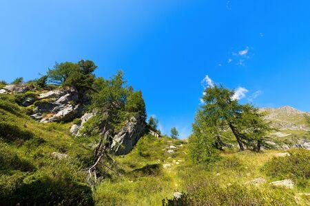 alto adige: Tress and vegetation in mountain, in the National Park of Adamello Brenta. Trentino Alto Adige, Italy Stock Photo