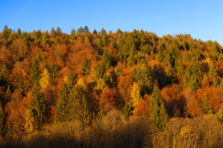 sella: Autumnal forest with pines, beeches and firs at sunset. Val di Sella Sella Valley, Borgo Valsugana, Trento, Italy Stock Photo