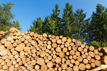 workable: Trunks of trees cut and stacked in the foreground, green pine in the background with blue sky