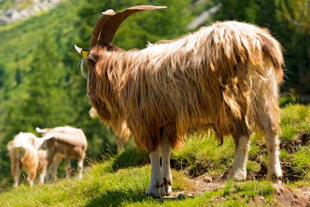 pieles esconde terciopelos Marsala Marrón Flores Cabra Suede Ocultar Piel Italiana