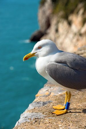 edge of cliff: Detail of a seagull on the edge of cliff above the Mediterranean sea. Portovenere, Liguria, Italy Stock Photo