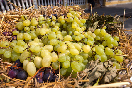 red straw: Detail of a wicker basket with white and red grapes on straw. Autumn harvest in northern Italy Stock Photo