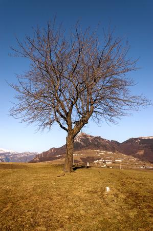 high plateau: Bare tree in winter in Italian Alps, Corno dAquilio, Plateau of Lessinia. Veneto, Italy Stock Photo