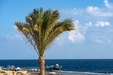 Palm tree in the coast of the Red Sea and a pier above the coral reef in Egypt Africa