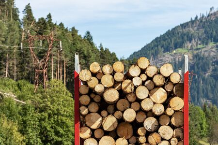 Close-up of a truck carrying wooden logs of pine trees in mountain, Italian Alps, Trentino Alto Adige, Italy Europe