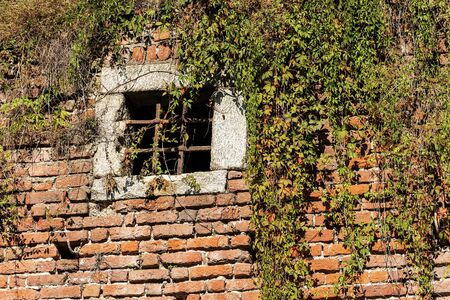 Detail of a medieval brick wall partially covered by creeper plants and  with a window with wrought iron bars, Italy, Europe 版權商用圖片