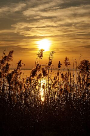 Lake Garda at sunset with silhouette of reeds. Lazise, Verona Province, Veneto, Italy, Europe