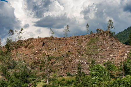 Trees fallen from the wind in November 2018, Baselga di Pine. Natural disaster in Trentino Alto Adige, Italy, Europe