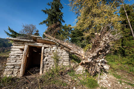 Fallen tree due to the very strong wind on a small stone house in Italian Alps, Veneto, Italy, Europe. Archivio Fotografico