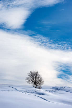 Lonely bare tree in a winter landscape with snow on blue sky with clouds. Lessinia Plateau (Altopiano della Lessinia), Regional Natural Park, Verona Province, Veneto, Italy, Europe.