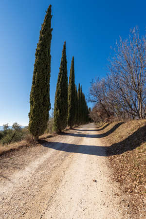 Dirt road with a row of cypress trees in the hill on the coast of Lake Garda (Rocca di Garda), Verona province, Veneto, Italy, Europe.