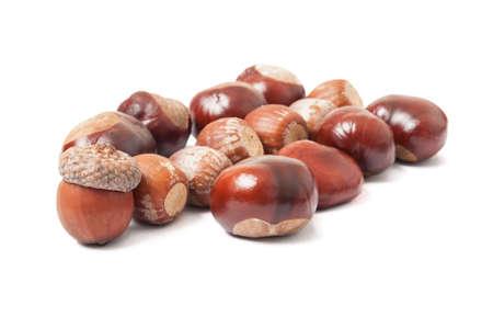 buckeye seed: Autumn acorns and chestnuts on white Stock Photo