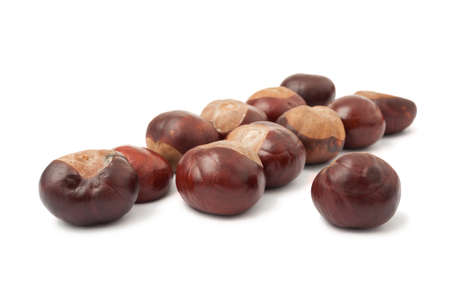 Group of wild chestnuts isolated on white background photo