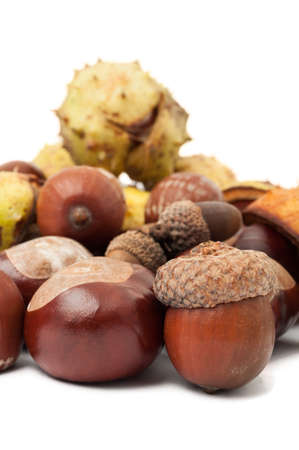 horse chestnuts: Closeup of horse chestnuts and acorns