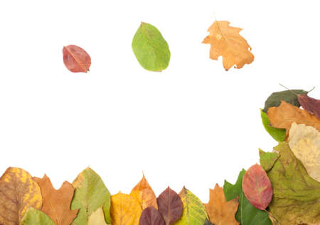 table decoration: Frame of autumn leaves on white text area Stock Photo