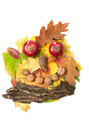 face in tree bark: Man face made of autumn fall leaves  and fall decorations isolated on white background