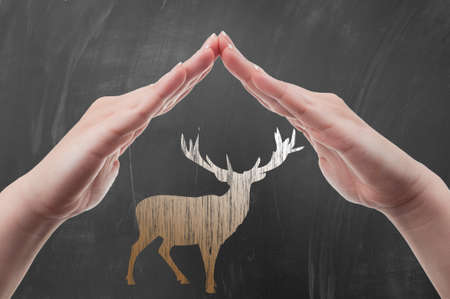 poaching: Hands protecting deer draw on blackboard as animal protection and poaching concept Stock Photo