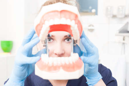 dental examination: Close-up woman dentist holding and looking thru plastic jaw in dental office as dental examination concept Stock Photo