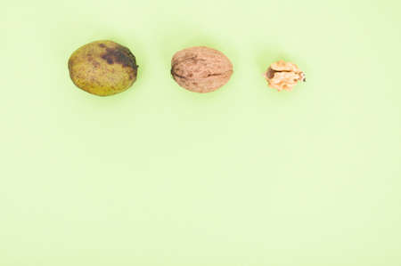 wholesome: Close-up of kernel and whole walnuts on green background with advertising area as wholesome food concept