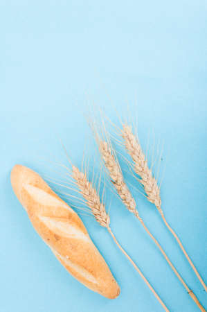 Crusty bread and grain spike isolated on blue background with copy space