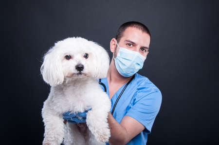 Selective focus of veterinary posing with white dog cute on black background Stock Photo