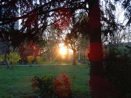 Sunset between trees in circus park(Bucharest,Romania) Stock Photo