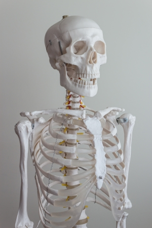 isolated full size artificial human skeleton model photo