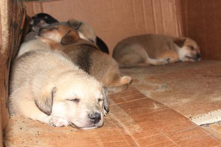 Little homeless puppies sleeping in cardboard box photo