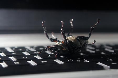 debugging: Dead bug on laptop keyboard. Symbol of antivirus, debugging, software optimization Stock Photo