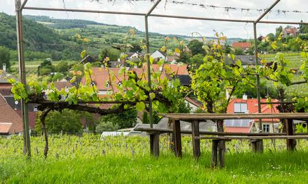 Holzbank in der Nähe von Weinbergen im österreichischen Dorf Standard-Bild - 61892903