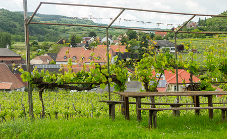 austrian village: Wooden table near vineyards in Austrian village