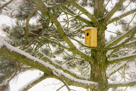 Bird house on snowy pine tree Standard-Bild