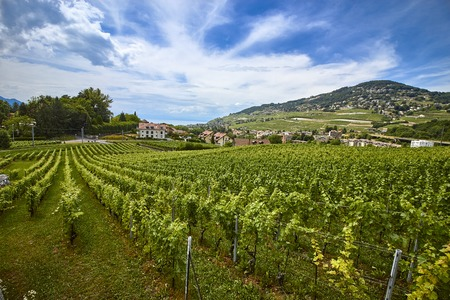 Sunny landscape of alpine vineyard near Lausanne, Switzerland