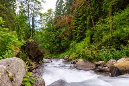 Lange Belichtung auf dem Fluss, der durch schönen rohen grünen Wald fließt.