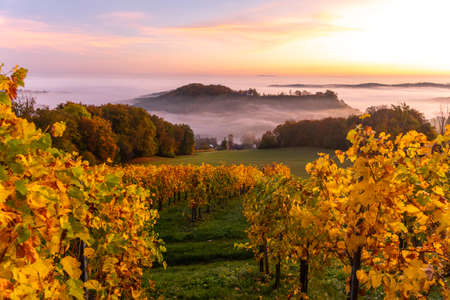Amazing misty autumn morning in hilly Styria, Austria.
