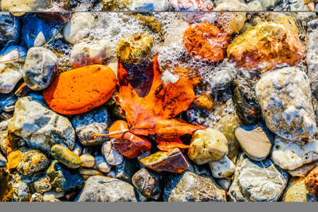 Maple leaf over pebbles on the beach. Top view of multicolored sea stones and leaf on the beach with water bubbles. 版權商用圖片