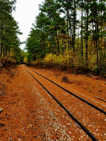 Railroad tracks running through a forest in northern Texas.