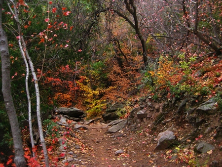 Fall colors along Emory Peak trail in Texas Stock fotó