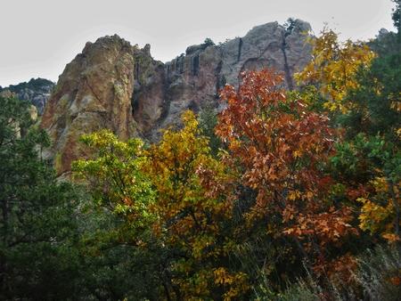 Fall leaves in Emory Peak Trail, Texas Stock fotó