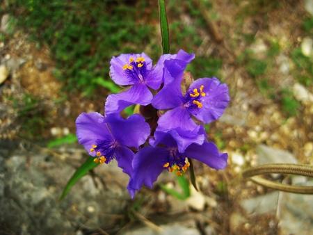 wildflowers in texas Stock fotó