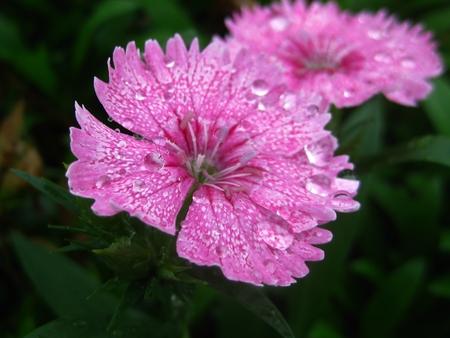 Morning dew on a flower Stock fotó