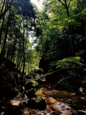 Hocking Hills Forest, Ohio Stock fotó