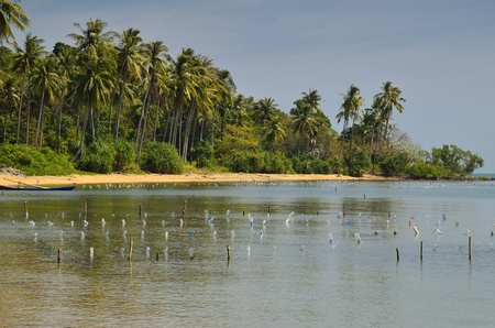 populate: Coconut palm trees populate this little island on the Cambodian coast